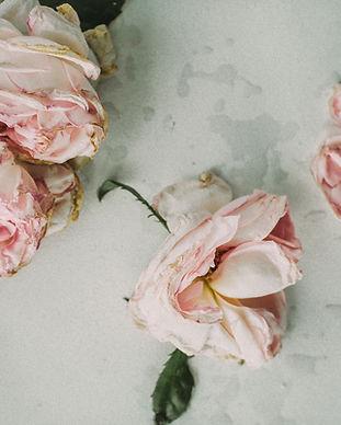 beautiful-close-up-colors-705673.jpg