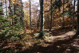 Forêt bac estable (2) - Copie.JPG