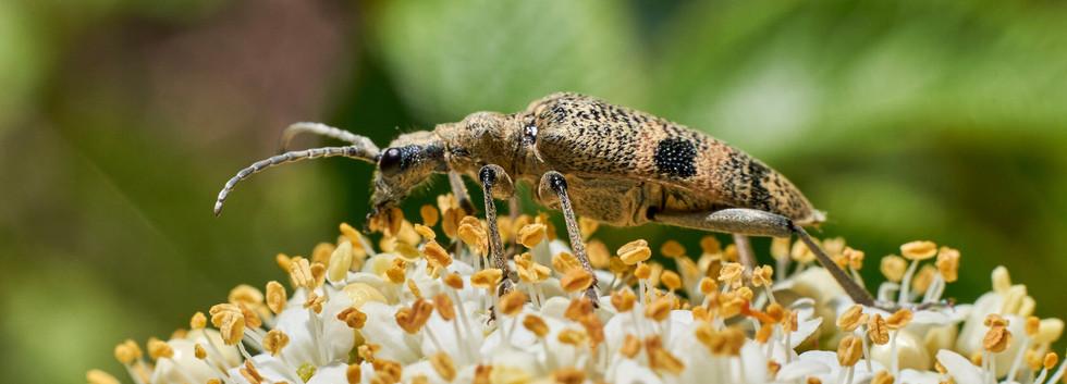 16-05_Macro - Pollenfrokost