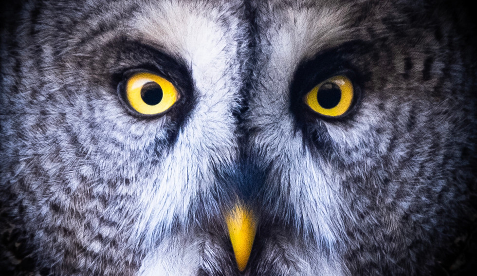 25-02_Macro-The owl