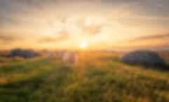 10_landbrukkonk_sauer_i_solnedgang_bjørn