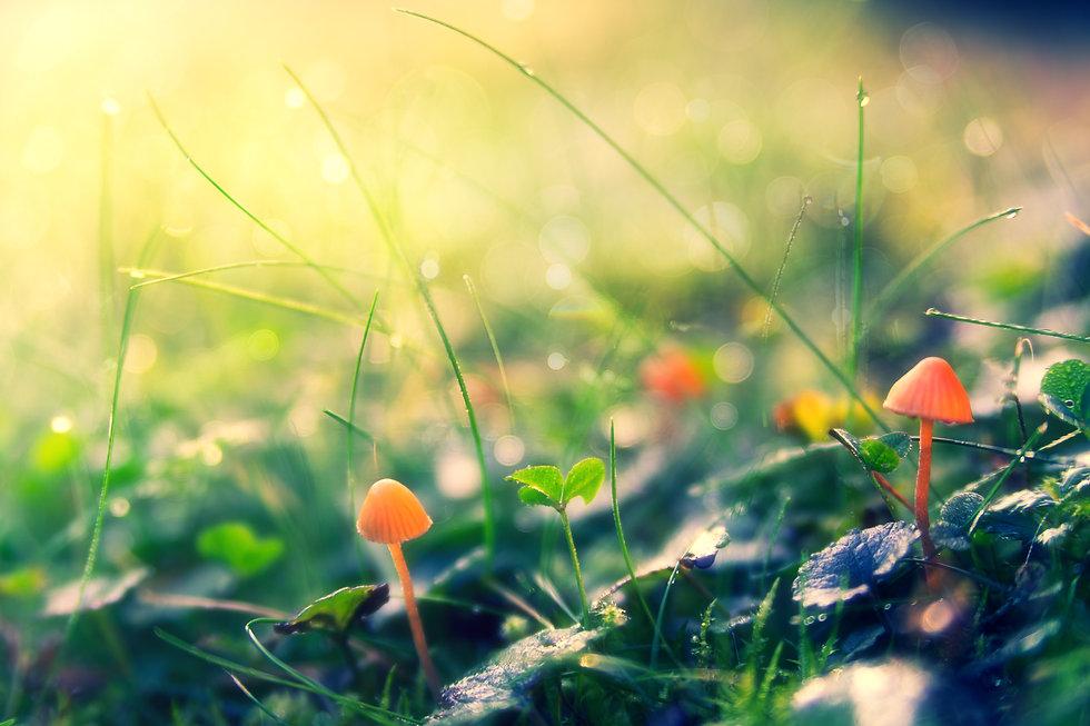 autumn-4117097.jpg