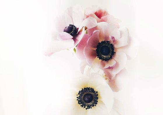 Blume_ueber_mich.jpg