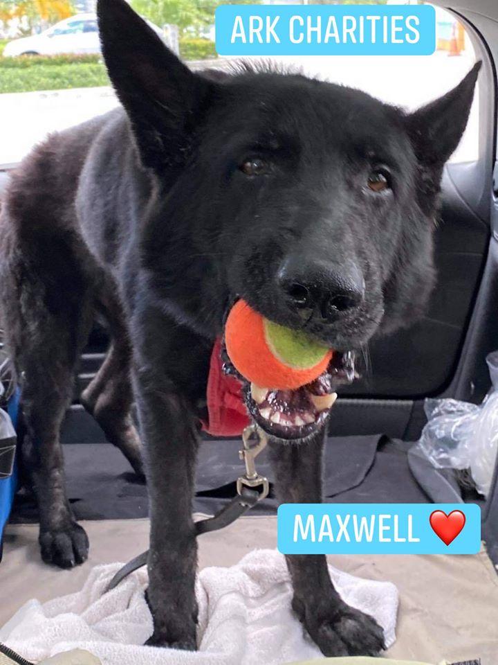 """Maxwell """"Maxi"""""""