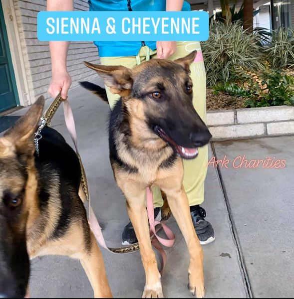 Sienna and Cheyenne