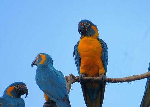 Professional bird-watching Bolivia
