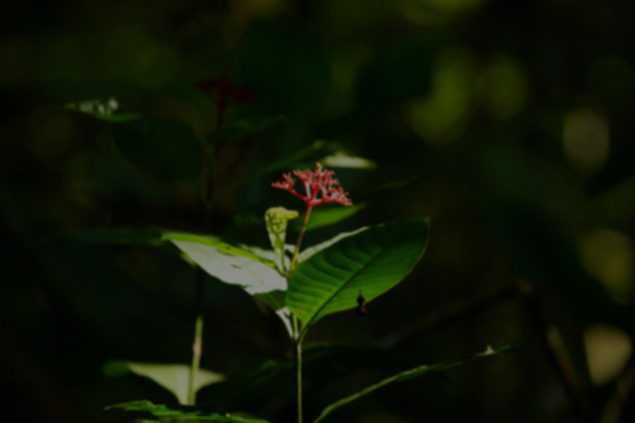 Exotic plant in Madidi National Park