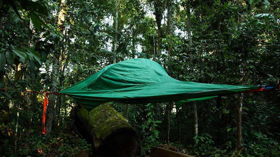 Accomodation tree-tent in Madidi National Park