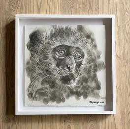 Bambo Sibiya | Vervet Monkey