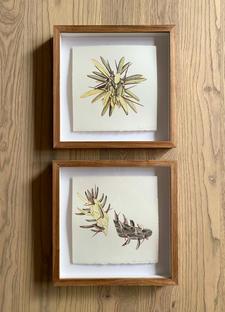Alexandré Vosloo | Cactus I & II