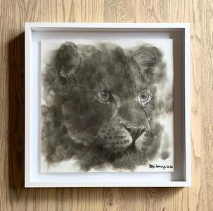 Bambo Sibiya | Lioness