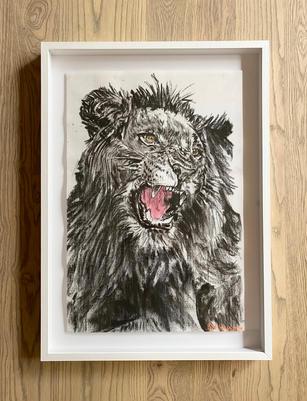 Bambo Sibiya | Lion Roar