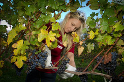 Renée harvesting