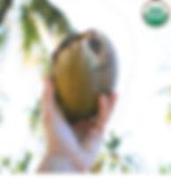 coconut organic eliquids