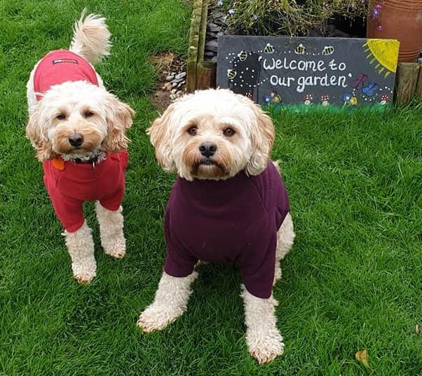 Dogs wearing their Hotterdog Fleeces
