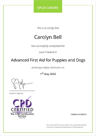 Advanced First Aid for Dogs