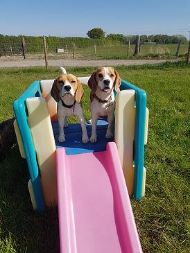 Day Care Slide