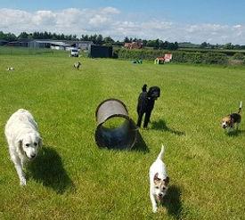 Doggie Day Care Field