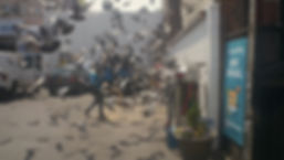 pigeons_fly.jpg