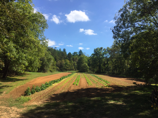 JuneBug_Asheville_Farm6