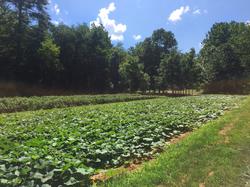 JuneBug_Asheville_Farm7