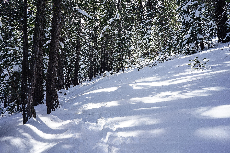 Snowshoe tracks through the trees.
