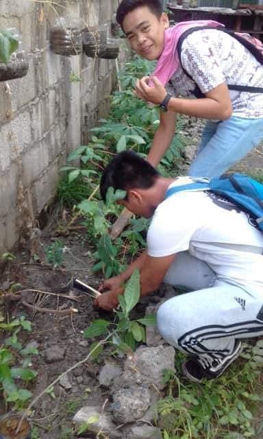 ALS Tree Planting at INHS Main