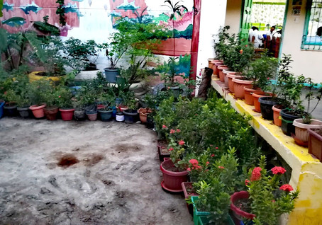 Interact's Recycled Plant Boxes