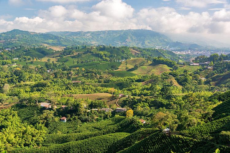 Aerial view of coffee farms near Manizal