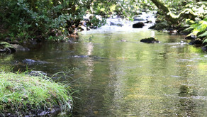 Standing in the stream ...