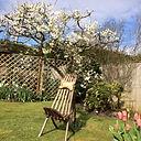 Plum tree Spring 2020.JPG