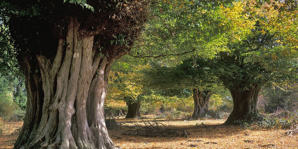 Hatfield Forest, Bishop's Stortford