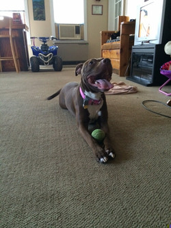 Daisy has lots of toys!