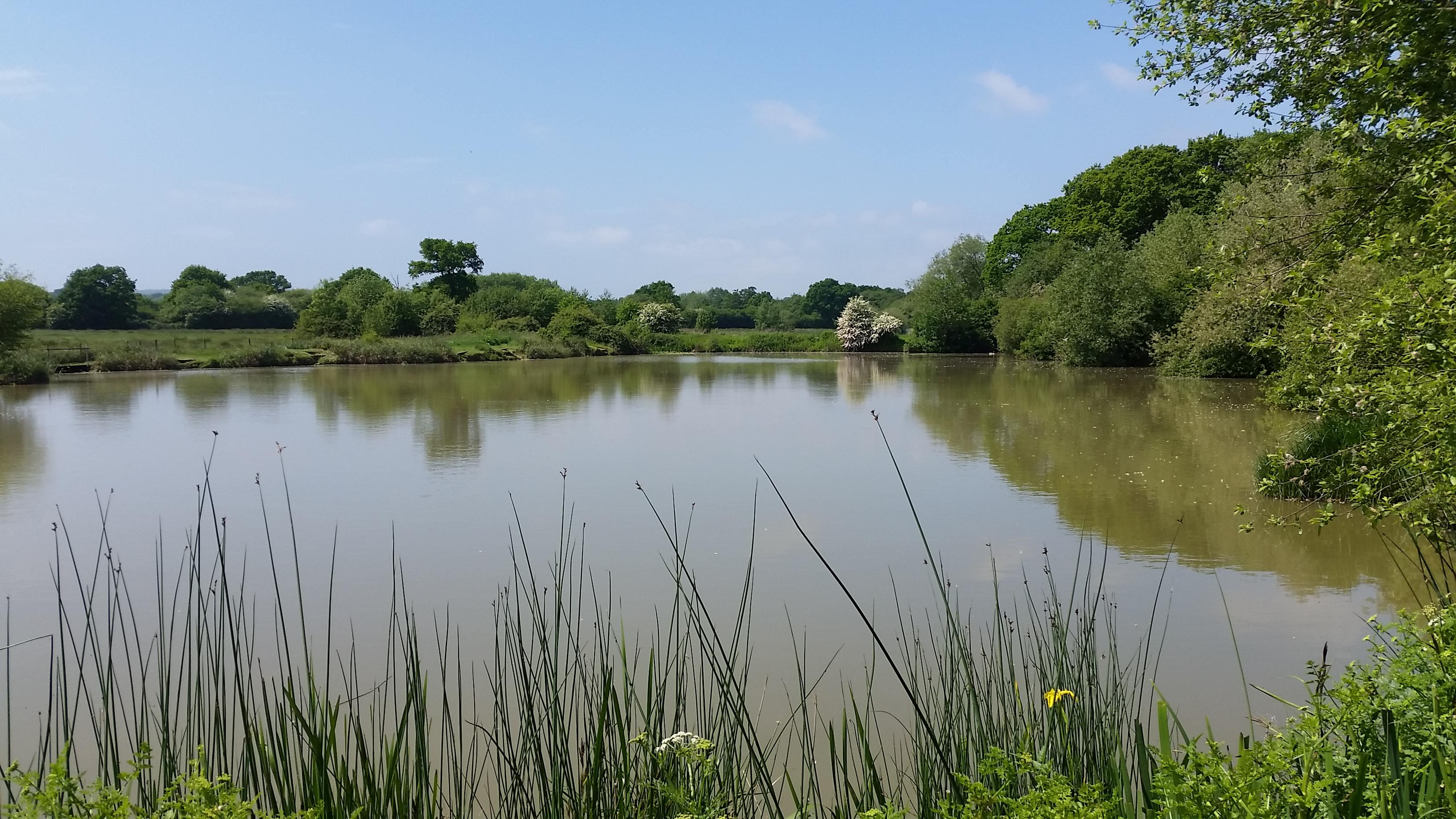 Nyewood Bottom Pond