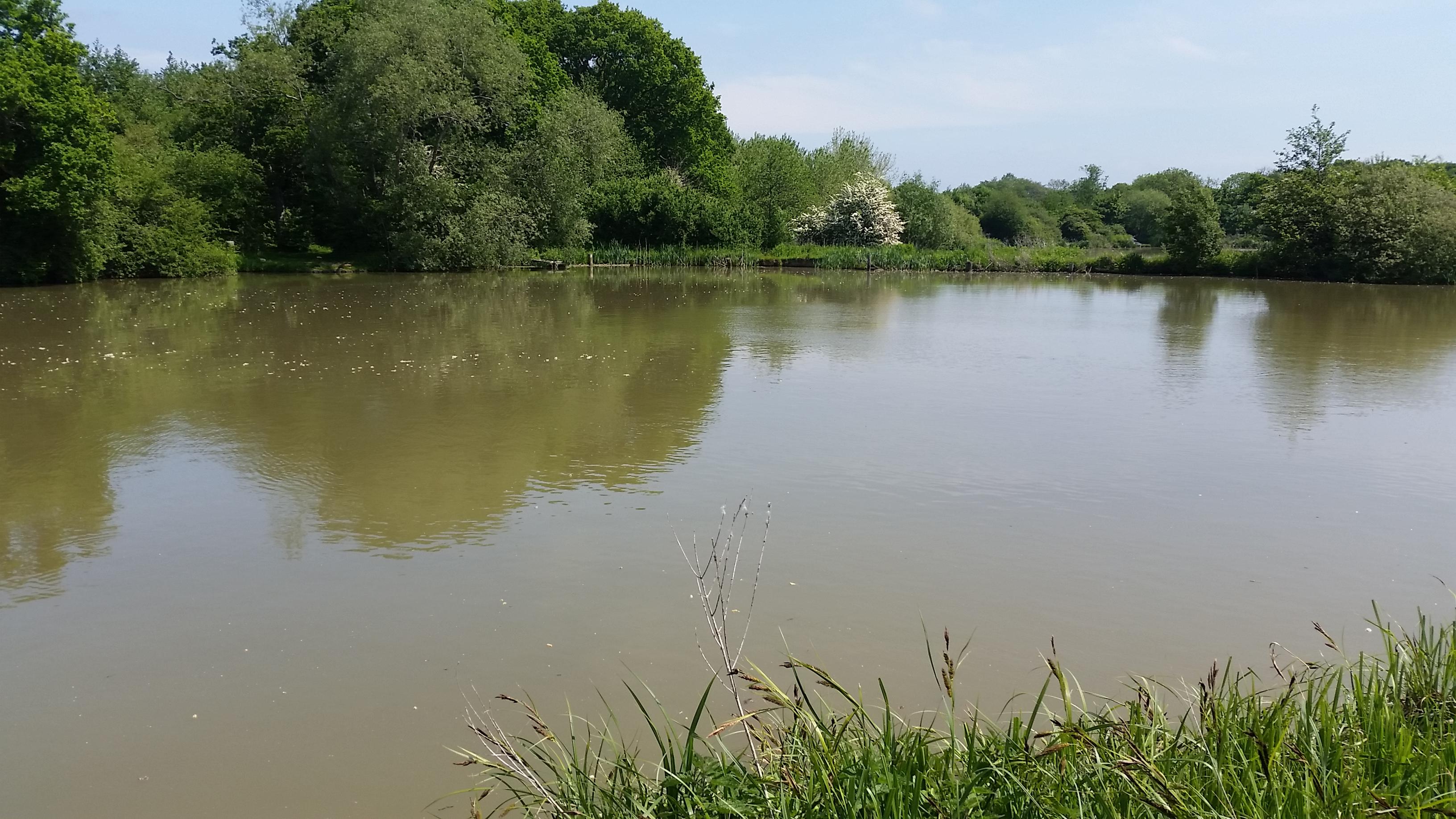 Top Pond