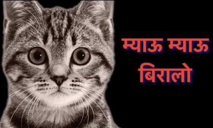 ミャウー ミャウー ビラロ(日本語で「にゃ~ん にゃ~ん 猫」という意味だ)