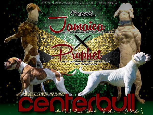Jamaica x Prophet.png