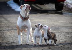 Sugar & Pups