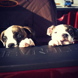 GoGo & Ruby