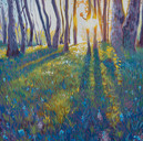 Bluebell Woods (SOLD)