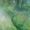 A Walk in Bluebell Woods (£295)