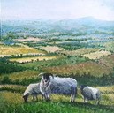 The Sheep of Kinpurnie Hill (SOLD)