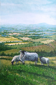 The Sheep at Kinpurney Hill