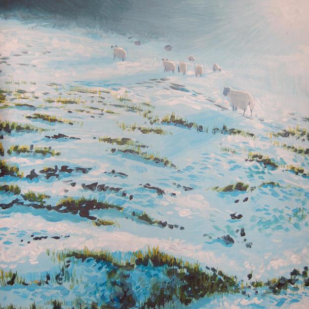 Glen Tilt Sheep