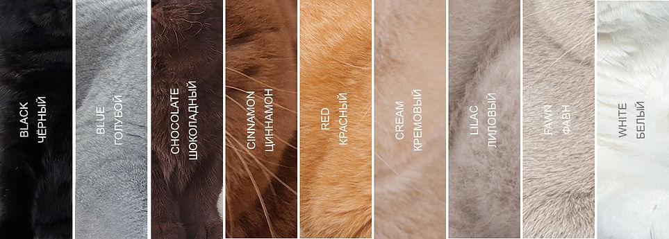 Палитра солидных окрасов британских кошек