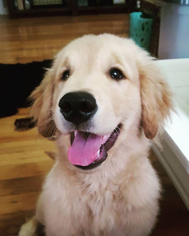 Puppy smiles! 🐶🐶🐶