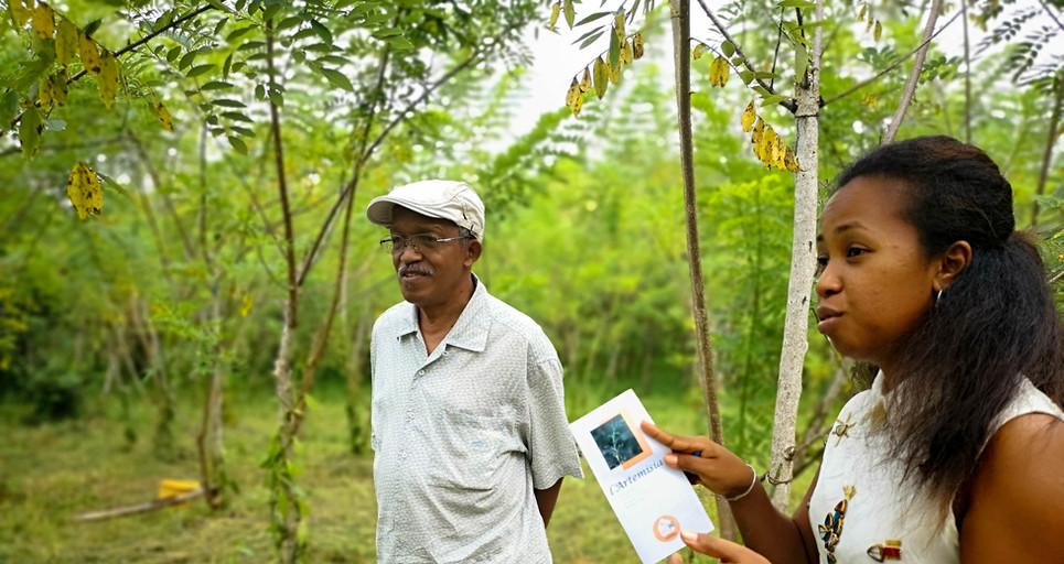 Projet plantation d'Artemisia
