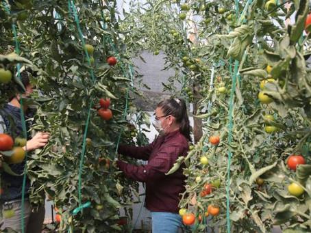 Centro de Interpretación de la Agricultura Urbana