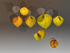 falling aspen leaves