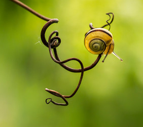 snail-face_3100604-1050.jpg